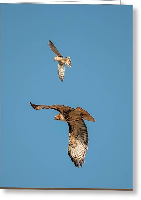Hawk Patrol Greeting Card