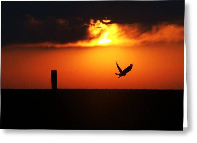 Hawk Rising With The Sun Greeting Card by Clarice  Lakota