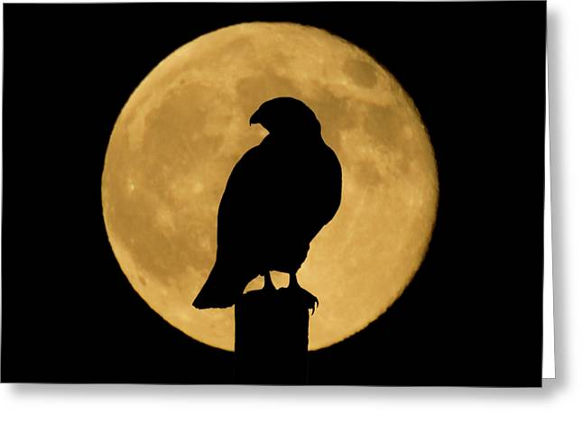 Greeting Card featuring the photograph Hawk Silhouette 2 by Shane Bechler