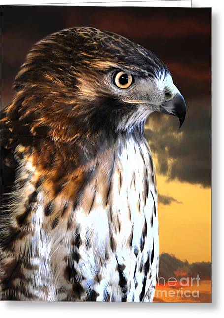 Hawk Sunset Greeting Card by Adam Olsen