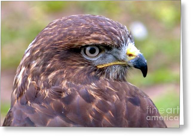 Hawks Eye View Greeting Card