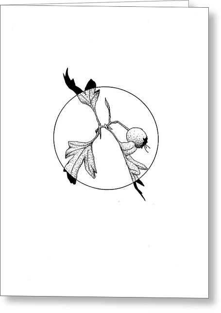 Hawthorn Berry Greeting Card