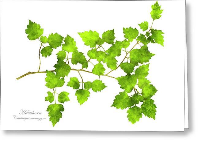 Hawthorn Pressed Leaf Art Greeting Card