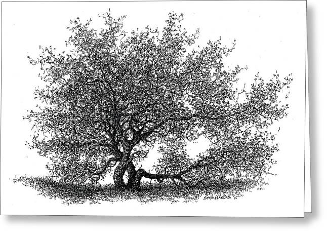 Hawthorne In The Spring Greeting Card