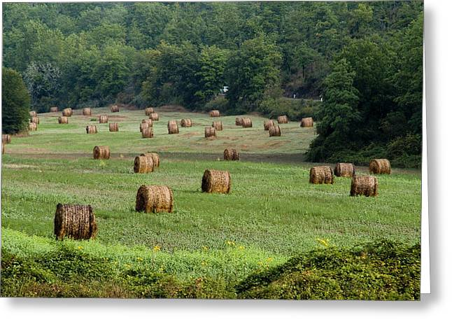 Chianti Greeting Cards - Hay Bails In A Field In Tuscany Greeting Card by Todd Gipstein
