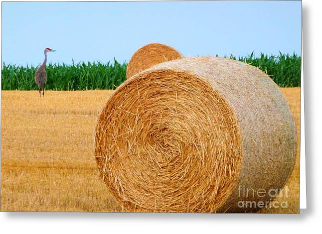 Hay Bale With Crane Greeting Card
