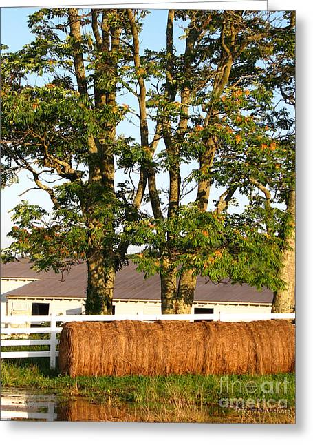 Hay Bales And Trees Greeting Card