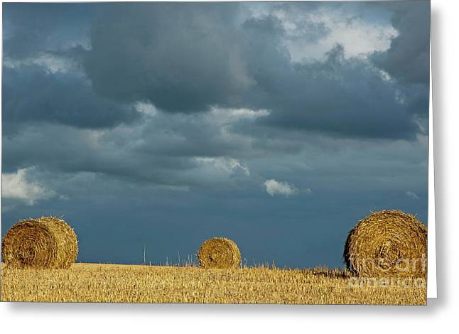 Hay Bales In Harvested Corn Field Greeting Card by Sami Sarkis
