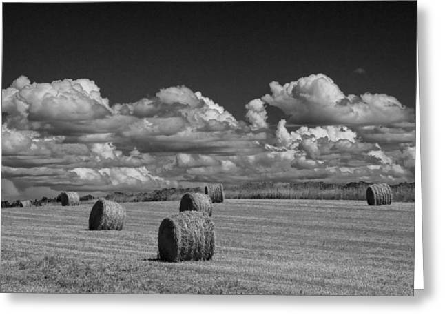 Bale Greeting Cards - Hay Bales on a Farm Field on Prince Edward Island Greeting Card by Randall Nyhof