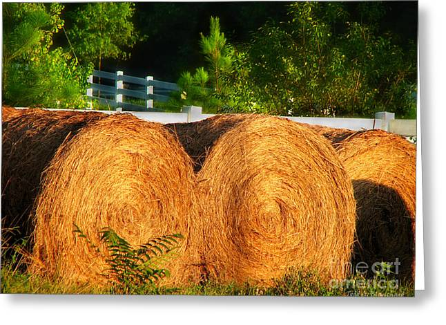 Hay Bales Greeting Card by Todd A Blanchard