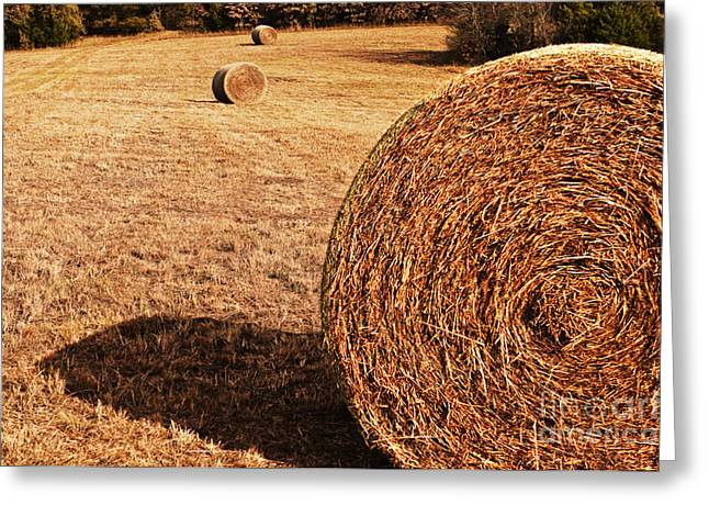 Hay In The Field Greeting Card by Tamyra Ayles