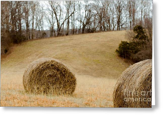 Hay On The Hills L Greeting Card by Victoria Lawrence