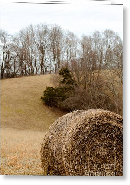 Hay On The Hills Ll Greeting Card by Victoria Lawrence