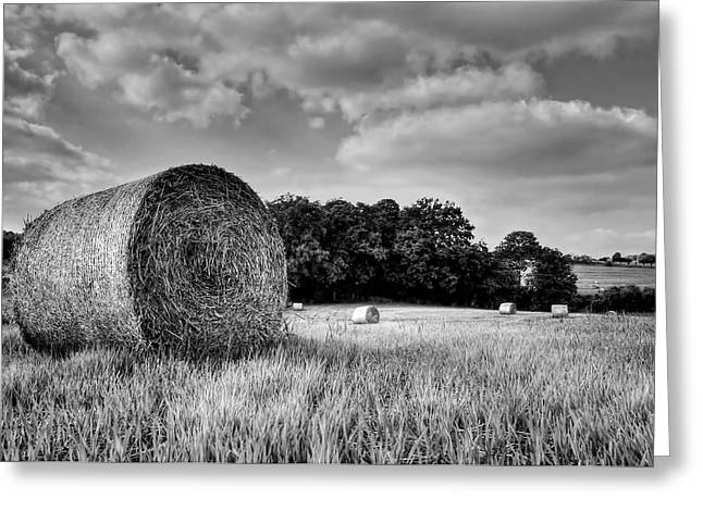 Hay Race Track Greeting Card by Jeremy Lavender Photography