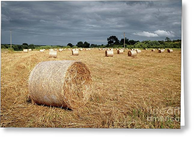 Hay Rolls Greeting Card by Carlos Caetano