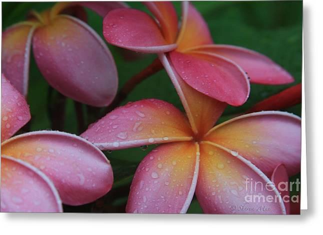Tropical Flowers Of Hawaii Greeting Cards - He Pua Laha Ole Aloha Hawaii Greeting Card by Sharon Mau
