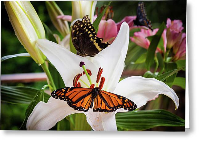 Greeting Card featuring the photograph He Still Gives Me Butterflies by Karen Wiles