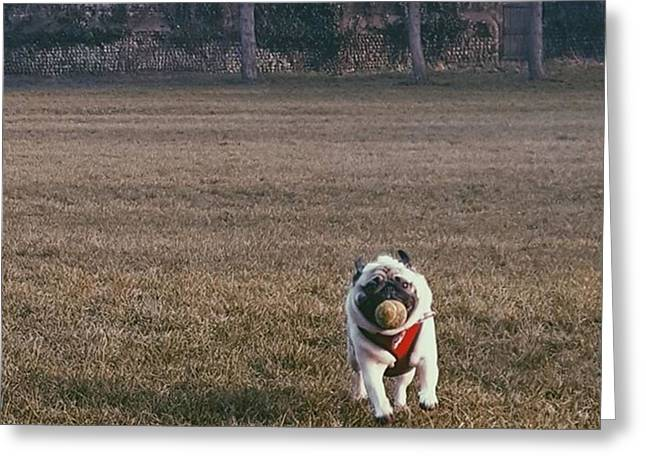 He Was So Happy In The Park Today Greeting Card by Natalie Anne