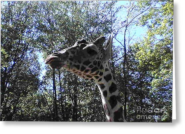 Head Giraffe Greeting Card by Daniel Henning