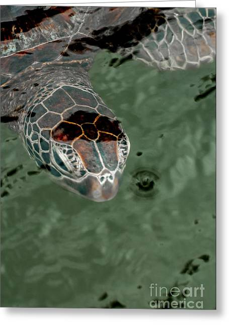 Head Of A Green Sea Turtle In The Water. Greeting Card