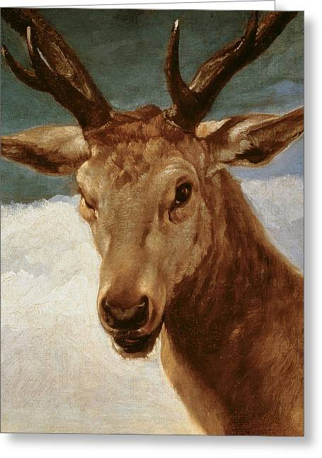 Head Of A Stag Greeting Card