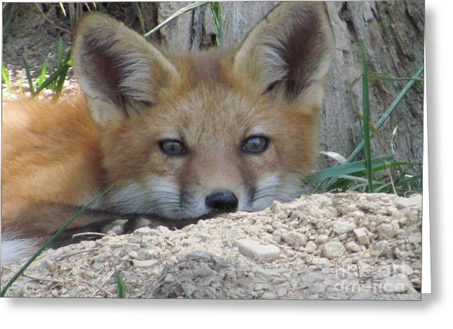 Greeting Card featuring the photograph Head Shot Of Fox Upclose by Laurinda Bowling