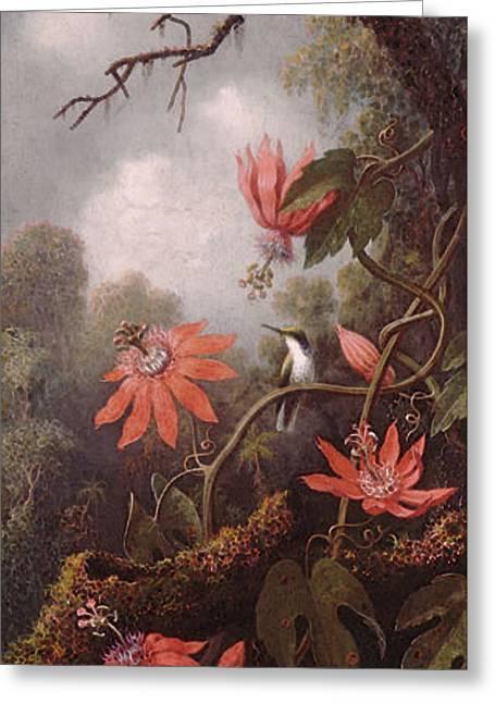 Heade Martin Johnson Hummingbird And Passionflowers Greeting Card by Martin Johnson Heade