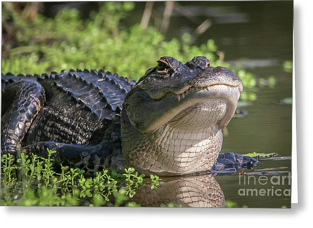 Heads-up Gator Greeting Card