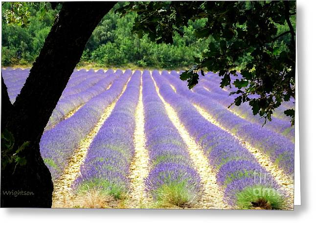 Healing Fields Of Lavender Greeting Card