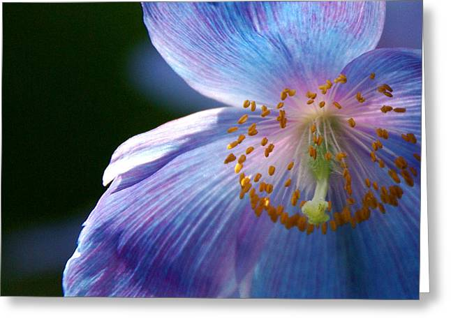 Greeting Card featuring the photograph Healing Light by Byron Varvarigos