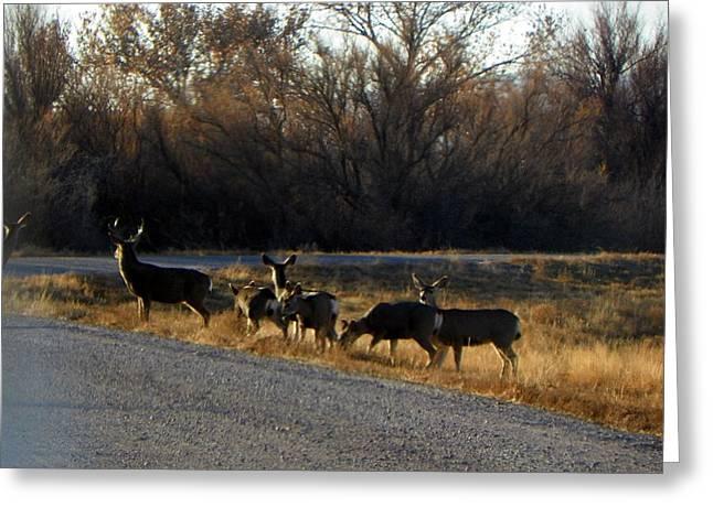 Heard Of Deer Greeting Card