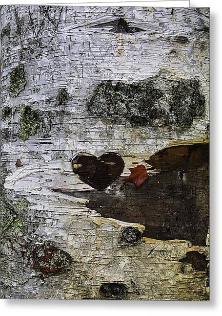 Heart Carved In Tree Greeting Card by Garry Gay
