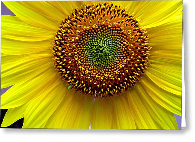 Heart Of A Sunflower Greeting Card by JoAnn Lense