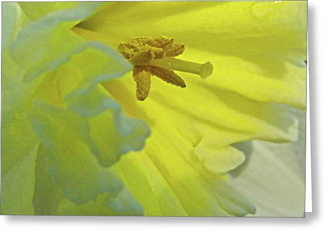 Greeting Card featuring the photograph Heart Of Daffodil by Larry Bishop