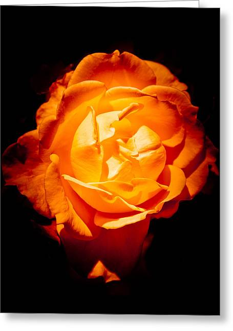 Heart Of Gold Greeting Card by Loriental Photography