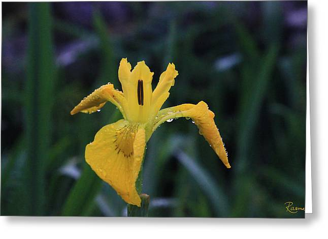 Heart Of Iris Greeting Card