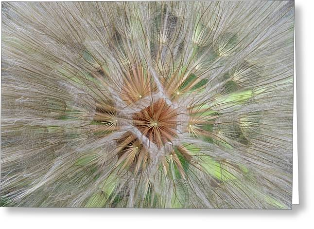 Heart Of The Dandelion Greeting Card