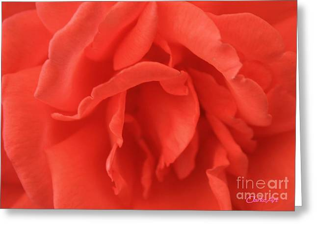 Heart Of The Rose - Red Greeting Card