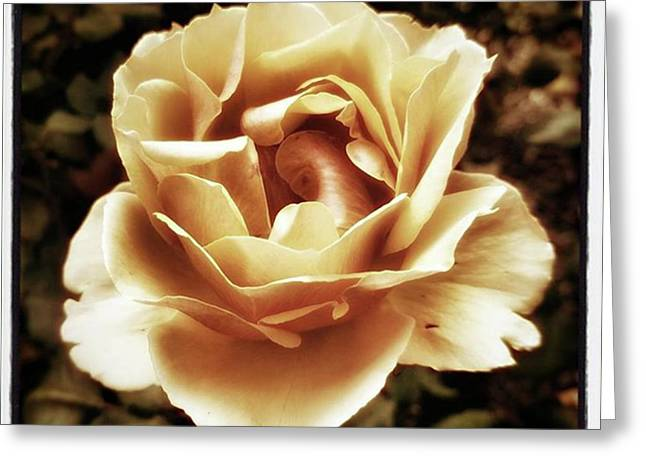Heart Rose. Imagine Your Heart Is A Greeting Card by Mr Photojimsf