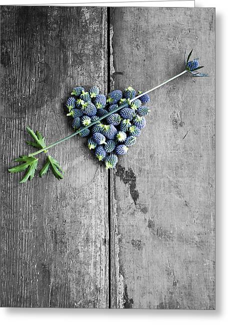 Heart Shaped Blue Thistle Buds With Arrow Stem Greeting Card