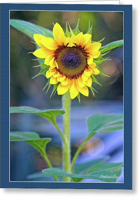 Heart Shaped Sunflower Greeting Card by Stephanie Hayes
