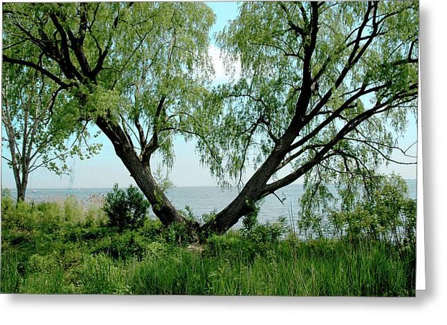 Heart Tree On Lake Saint Clair Greeting Card