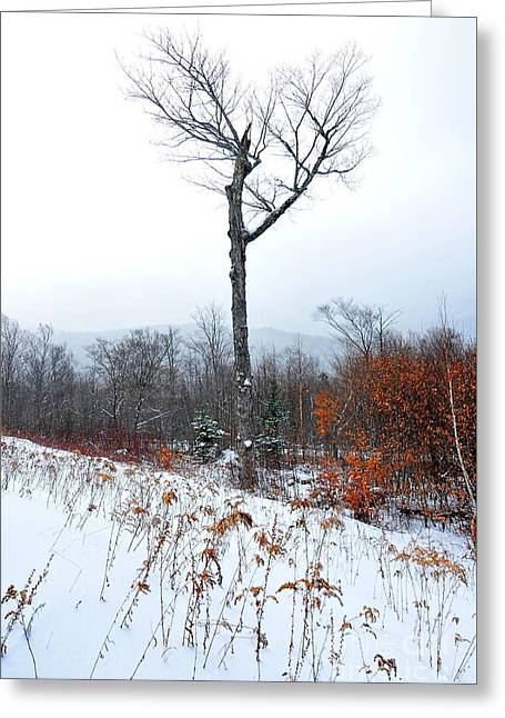 Heart Tree Winter  Greeting Card