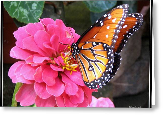 Hearts On Her Wings Greeting Card by Trina Prenzi