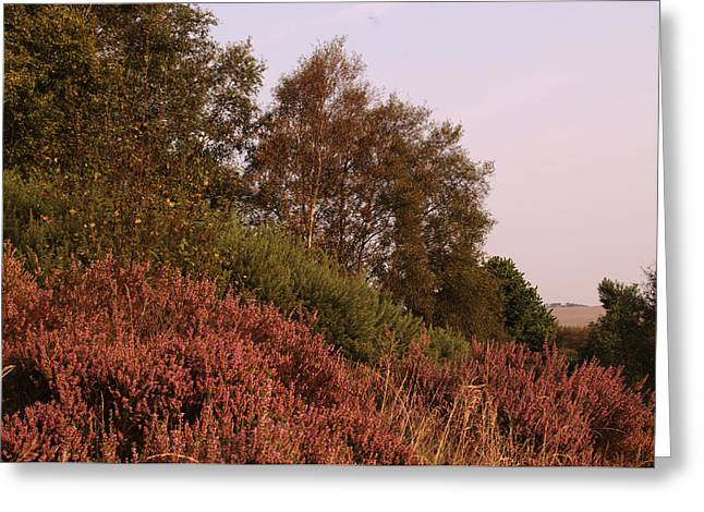 Heather And Trees On Hednesford Hills Greeting Card by Adrian Wale