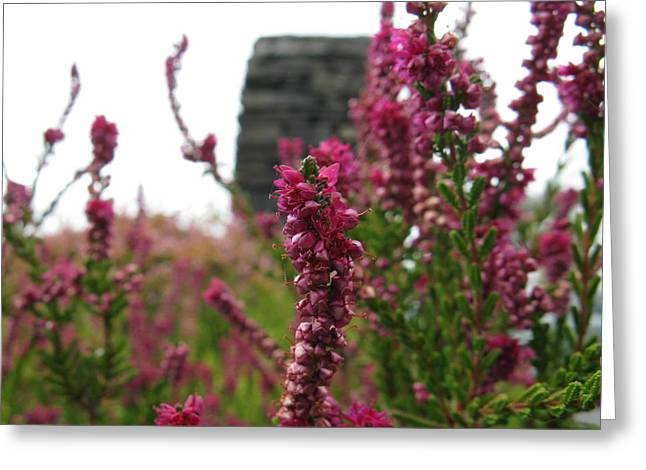 Heather Greeting Card by Greg Weflen