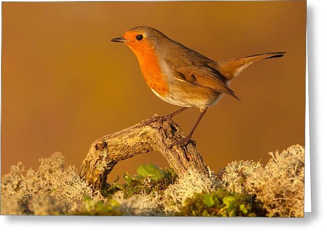 Heathland Robin Greeting Card