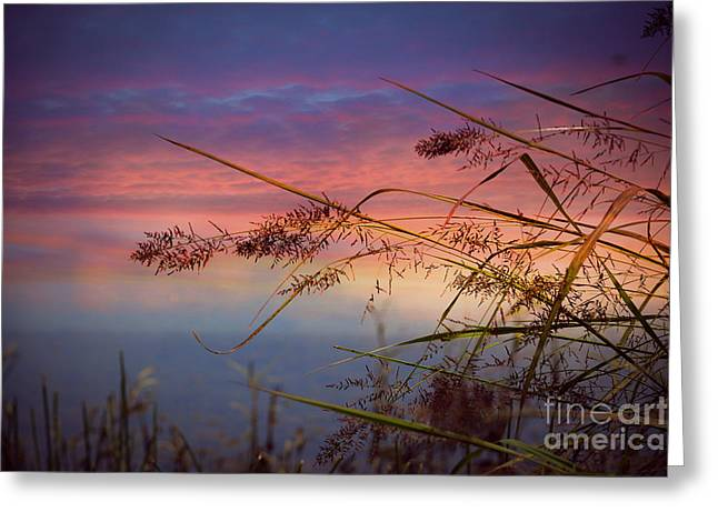 Greeting Card featuring the photograph Heavenly Bliss by Brenda Bostic