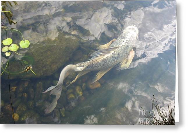 Heavenly Fish Greeting Card by Laurianna Taylor