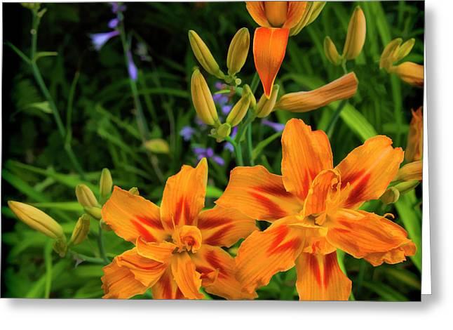 Heavenly Orange Scorcher Daylily Greeting Card